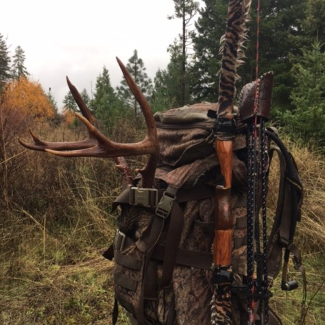 A trophy class set of black-tailed deer antlers in a backpack in preparation for the return to camp. Tken with Traditonal Archery Gear.