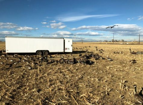A Large Trailer Capable of Holding 400 Full Bodied Taxidermy Goose Decoys On A Hunting Trip Near Greeley, Colorado