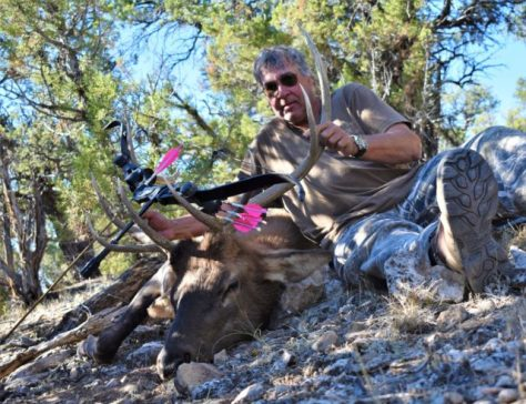 A Bull Elk Taken With A Hoyt Satori Tradition Recurve By A Bowhunter In Northern Colorado. Photograph By Michael McCarty