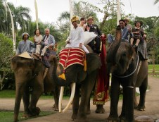 Wedding on an Elephant!