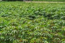 'Green' Fields!