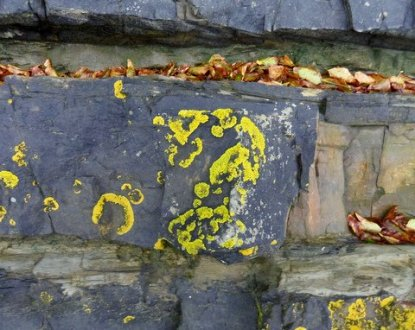 Rock face at Fremington Quay. lichen and dead leaves