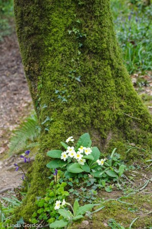 fav-tree_lindagordon_170413_111_LR