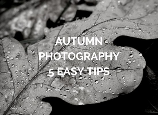 Autumn Photography 5 Easy Tips Post Cover