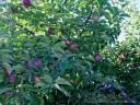 IMG_7431 2 crop 600x450wm