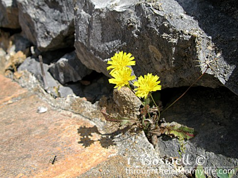 yellow flower and ant