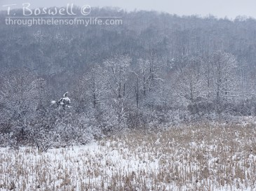 DSC01649-2-snow-fog-field-4x3cp-terry-boswell-wm