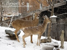 DSC06532-2-deer-bird-feeder-snow-4x3cp-terry-boswell-wm
