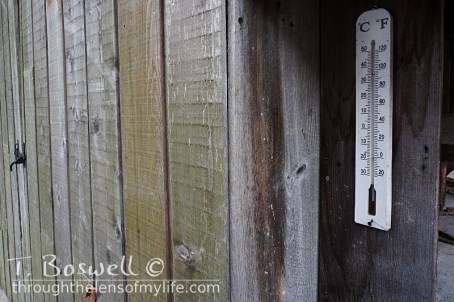 DSC07191-2-weathered-wood-shed-old-thermometor-3x2cp-terry-boswell-wm
