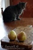 DSC07302-2-pair-pears-cat-sun-2x3cp-terry-boswell-wm