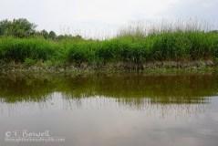 DSC01029-2-wallkill-river-reflections-grass-2015-terry-boswell-wm