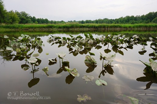 DSC01177-walllkill-river-lilly-paps-summer-2015-terry-boswell-wm