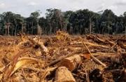forest-destroyed