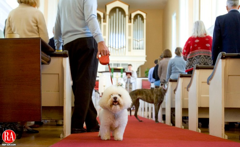 WASHINGTON, CT-08 OCTOBER 2006-100806JS01-Niki, an 11 year-old Bichon Frise owned by Margaret and Lester Edelman of Roxbury looks around the inside of the First Congregational Church in Washington on Sunday prior to the church