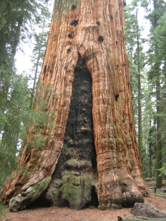The other side of the General Sherman Tree. Notice the large fire scar.