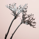 """There's refreshing beauty in Flowering Branches' """"Blossom and Decay"""" (Premiere Play)"""