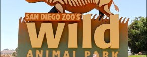 A Trip To The San Diego Wild Animal Park