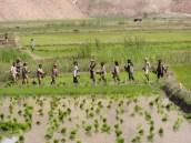 Reisbauern an der Straße zwischen Pul-e Khumri und Kunduz. Foto: Thomas Ruttig (2006).