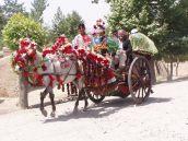 Geschmückter Gadi (Pferdekutsche) in Kundus.