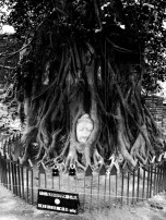 Buddha's head in tree - Ayutthaya, Thailand