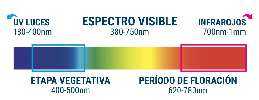 Espectro de luz necesario para cultivo: Etapa Vegetativa: luz azul y etapa de floración: luz roja