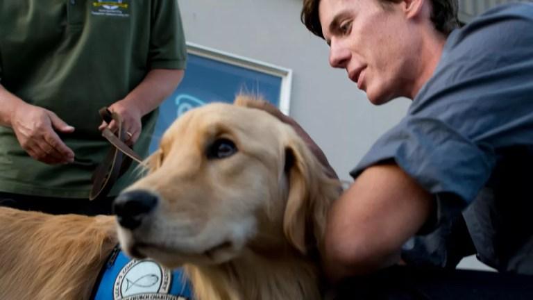 Dog Training at Home Vs Dog School