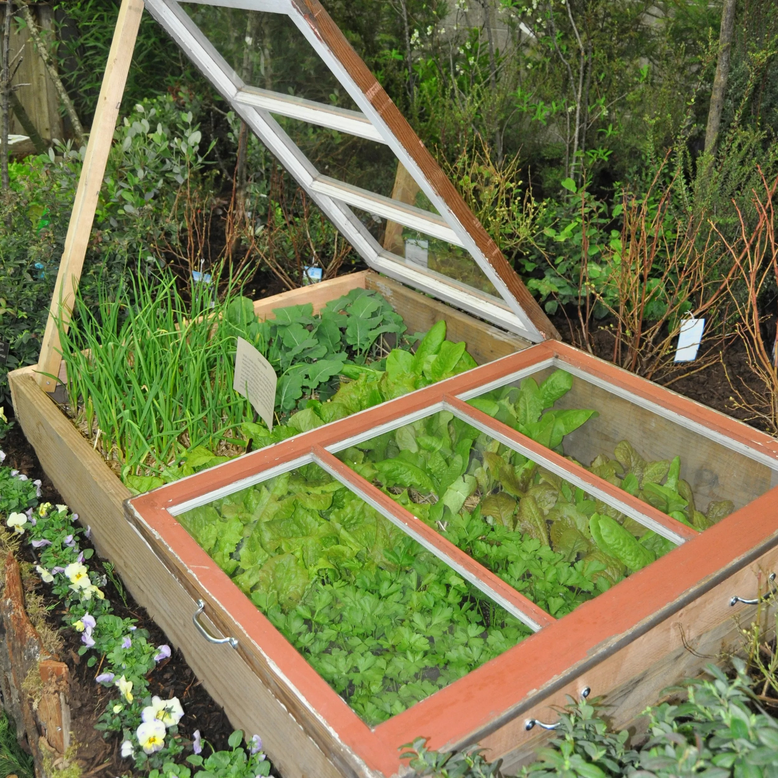 gardening cold frame helps plants