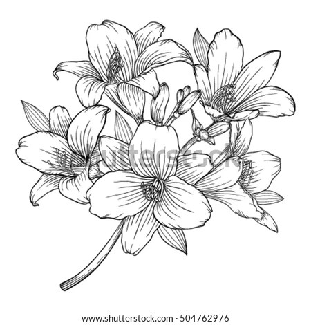 Beautiful Monochrome Black White Bouquet Lily Stock Vector ...
