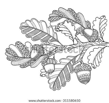 Vector Illustration Oak Brunch Leaves Acorns Stock Vector