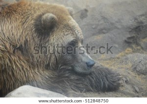 River Otter Lontra Canadensis Field Guide Stock Illustration 200272811  Shutterstock