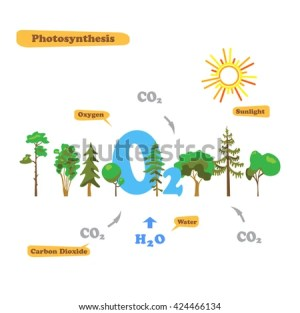 Photosynthesis Diagram Stock Images, RoyaltyFree Images & Vectors | Shutterstock