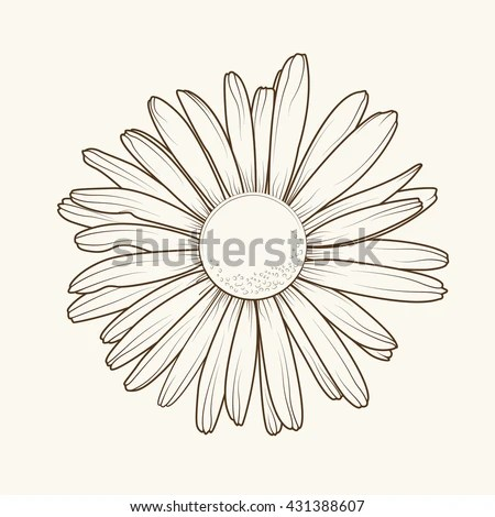 Daisy Stock Photos, Royalty-Free Images & Vectors ...