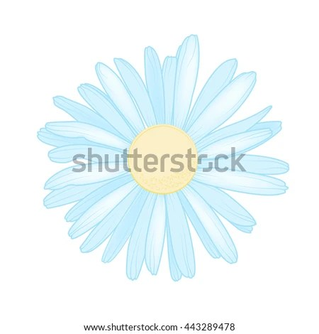 Isolated Daisy Chamomile Flower Side View Stock Vector ...