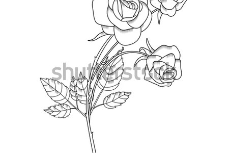 Pencil Sketch Of Flowers Full Hd Pictures 4k Ultra Full Wallpapers