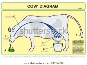 all you need to know about  milk  milk??
