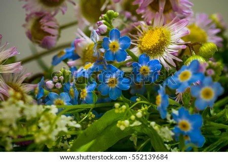 Wild Flowers Featuring Forgetmenot Flowers Stock Photo ...