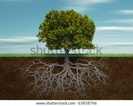 Tree Roots Stock Images Royalty Free Images Amp Vectors Shutterstock