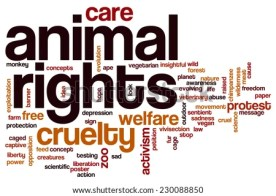 Animal rights word cloud concept - stock photo