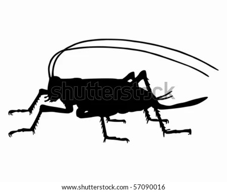 https://i1.wp.com/thumb10.shutterstock.com/display_pic_with_logo/131800/131800,1279045310,3/stock-vector-cricket-silhouette-57090016.jpg