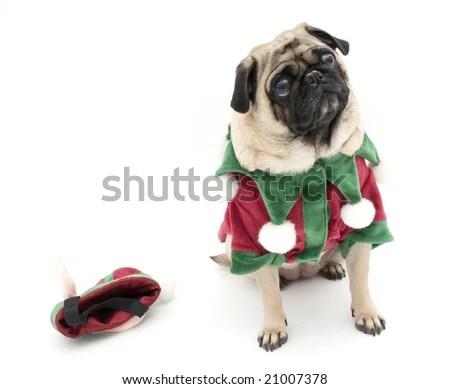 Pug Dog Christmas Costume Lying On Stock Photo 526276900