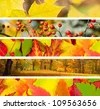 Set of 5 Different Autumn's Banners / Nature - stock photo