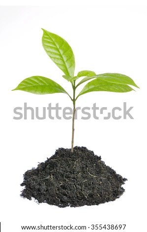 Tree Seed Stock Photos Images Amp Pictures Shutterstock