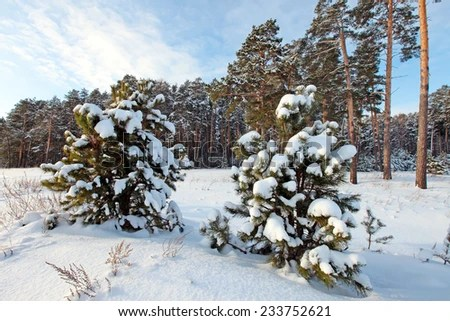 Arctic Plants Stock Images Royalty Free Images Amp Vectors Shutterstock