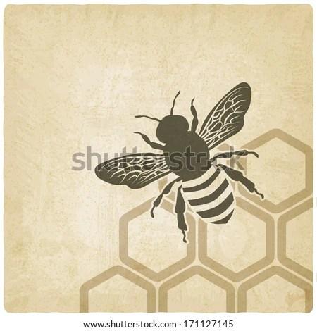 Honeybee Stock Images RoyaltyFree Images Vectors