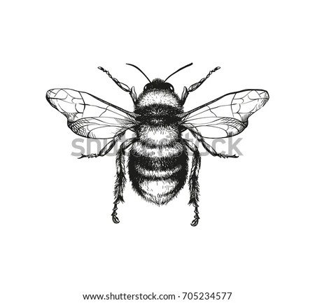 Vector Engraving Illustration Honey Bee On Stock Vector