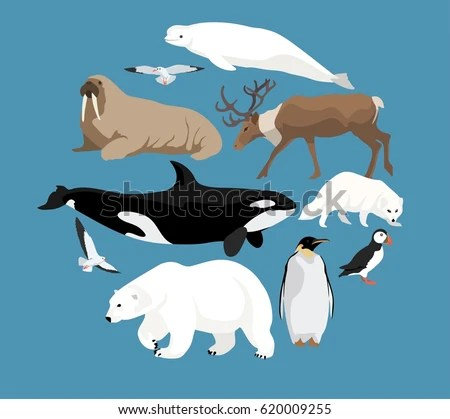 Arctic Fox Cartoon Stock Images Royalty Free Images