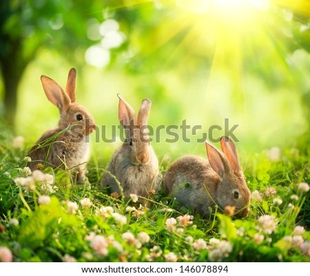 Rabbits Beauty Art Design Cute Little Stock Photo (Royalty ...