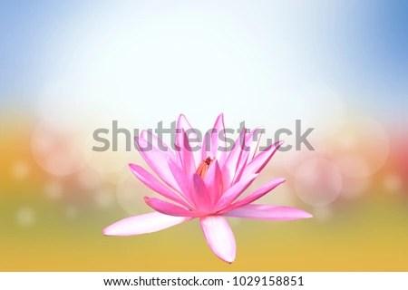 Vesak Day Buddhist Lent Day Buddhas Stock Photo (Edit Now ...