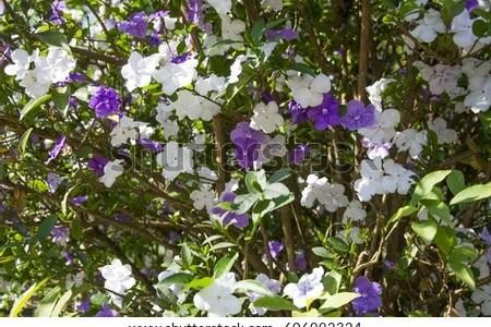 Best white flowers purple flowering tree names white flowers white flowers purple flowering tree names mightylinksfo