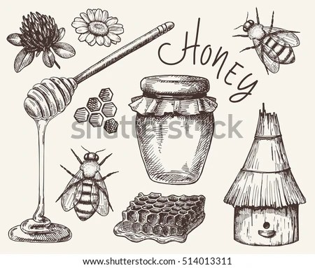 Bee Drawing Stock Images RoyaltyFree Images Vectors